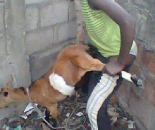 Weird News: Man 'Rapes' Goat To Death In Ondo