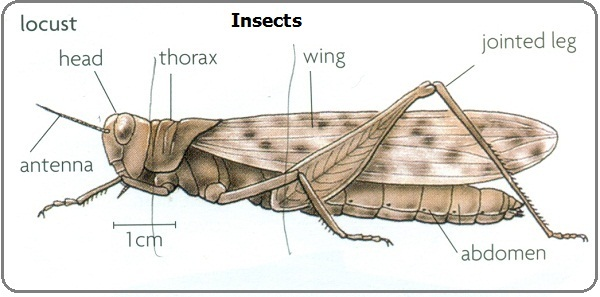 #6 Phylum Arthropods | Biology Notes for IGCSE 2014