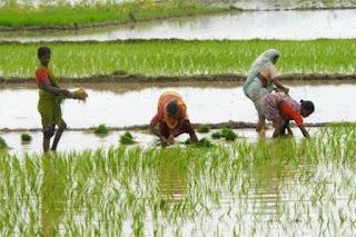 Development Projects in Andaman & Nicobar Island-- NABARD
