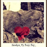 Goodbye, My Baby Boy...