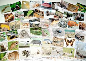50 North America Animal Cards (free printable)