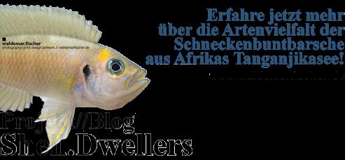 http://www.agenturfischer.com/blogs.html