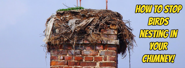 How to stop birds nesting in your chimney 02