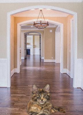 imágenes de gatos