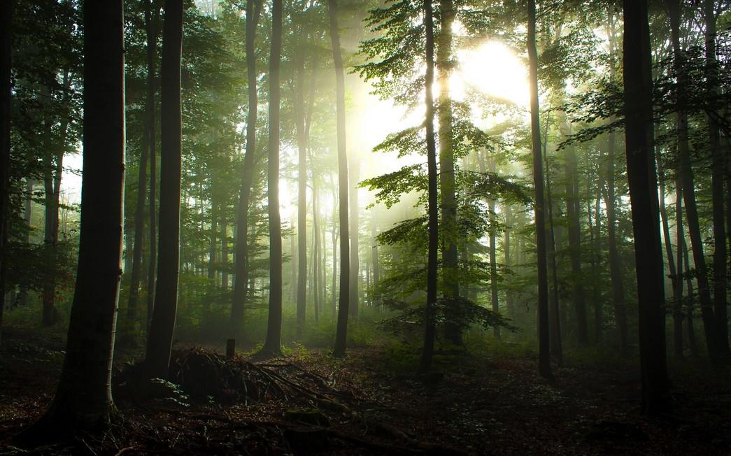HUtan Black Wood Fotografi Foto Landscape dengan Hutan Yang Luar Biasa Cahaya dan Backligth Indah