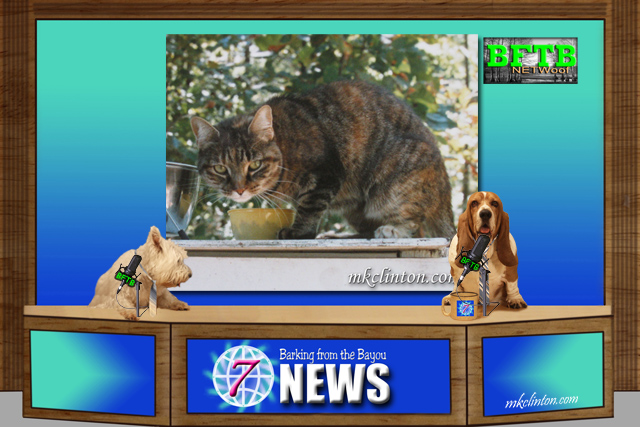 BFTB NETWoof News with tabby cat on background