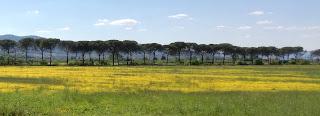 Immagine Parco Cascine di Tavola - Primavera