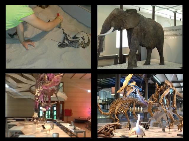 musée des sciences naturelles Bruxelles