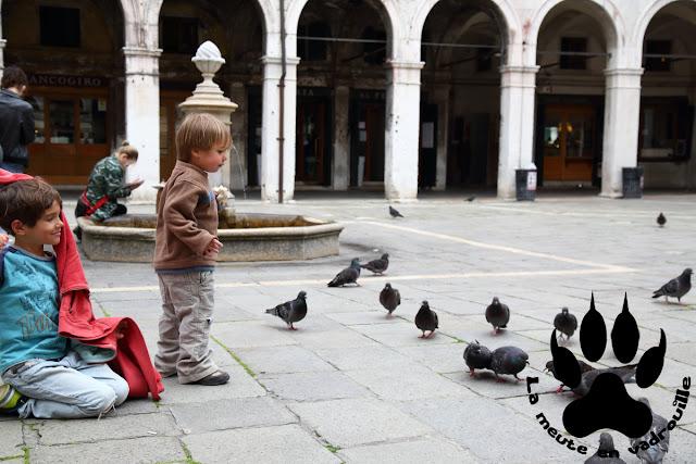 moyen-petit-loup-pigeons-venise