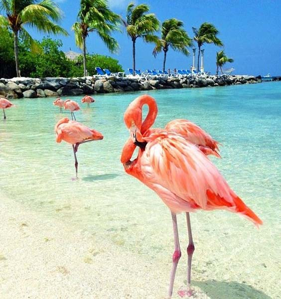 flamingo-awesome