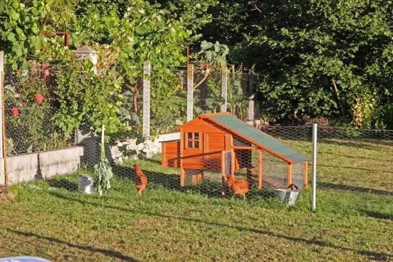 Tu for Gallinero jardin