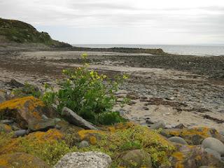 Rocky beach near Milton, Scotland