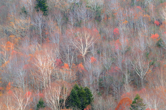 #photo #landscape #sigma #foveon #sdquattroh #japan #yamagata #yonezawa #山形県 #米沢市 #山形帝國 #写真 #風景写真