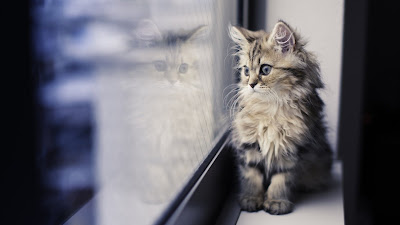 cat and mirror hd wallpaper