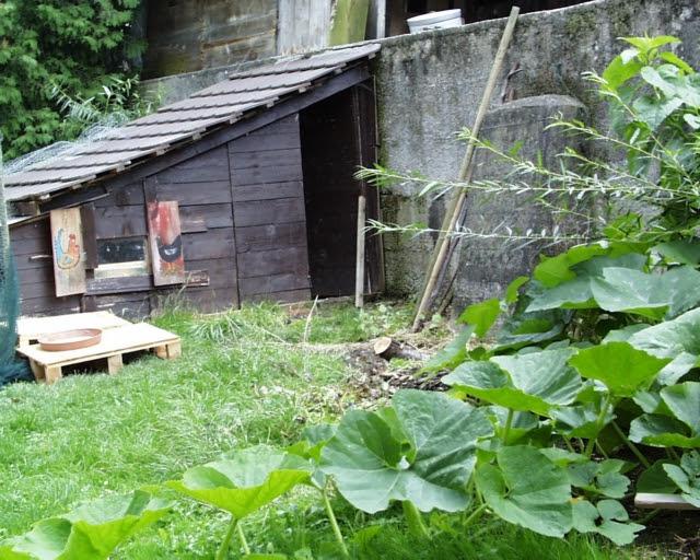 dans mon jardin tu viendras une petite basse cour pour. Black Bedroom Furniture Sets. Home Design Ideas