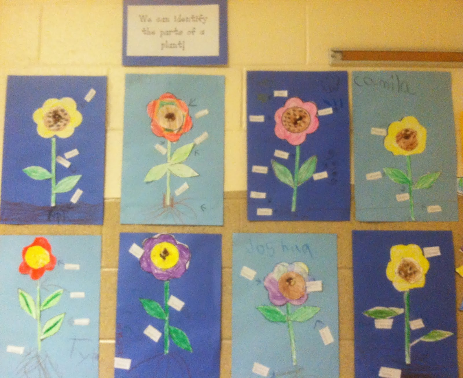 Miss Llewellyn S Kindergarten Parts Of A Plant