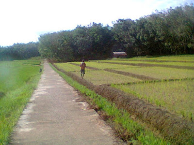Contoh Pertanian Organik