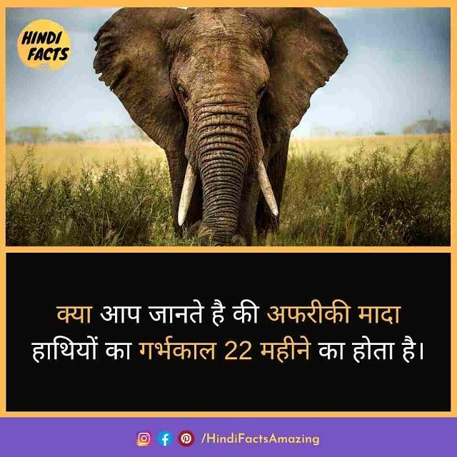 Elephant in Hindi - हाथी की जानकारी और 35 रोचक तथ्य
