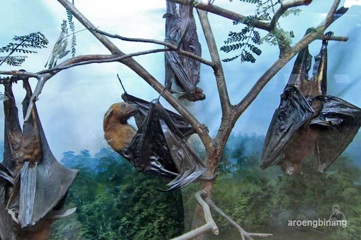 kelelawar museum zoologi bogor