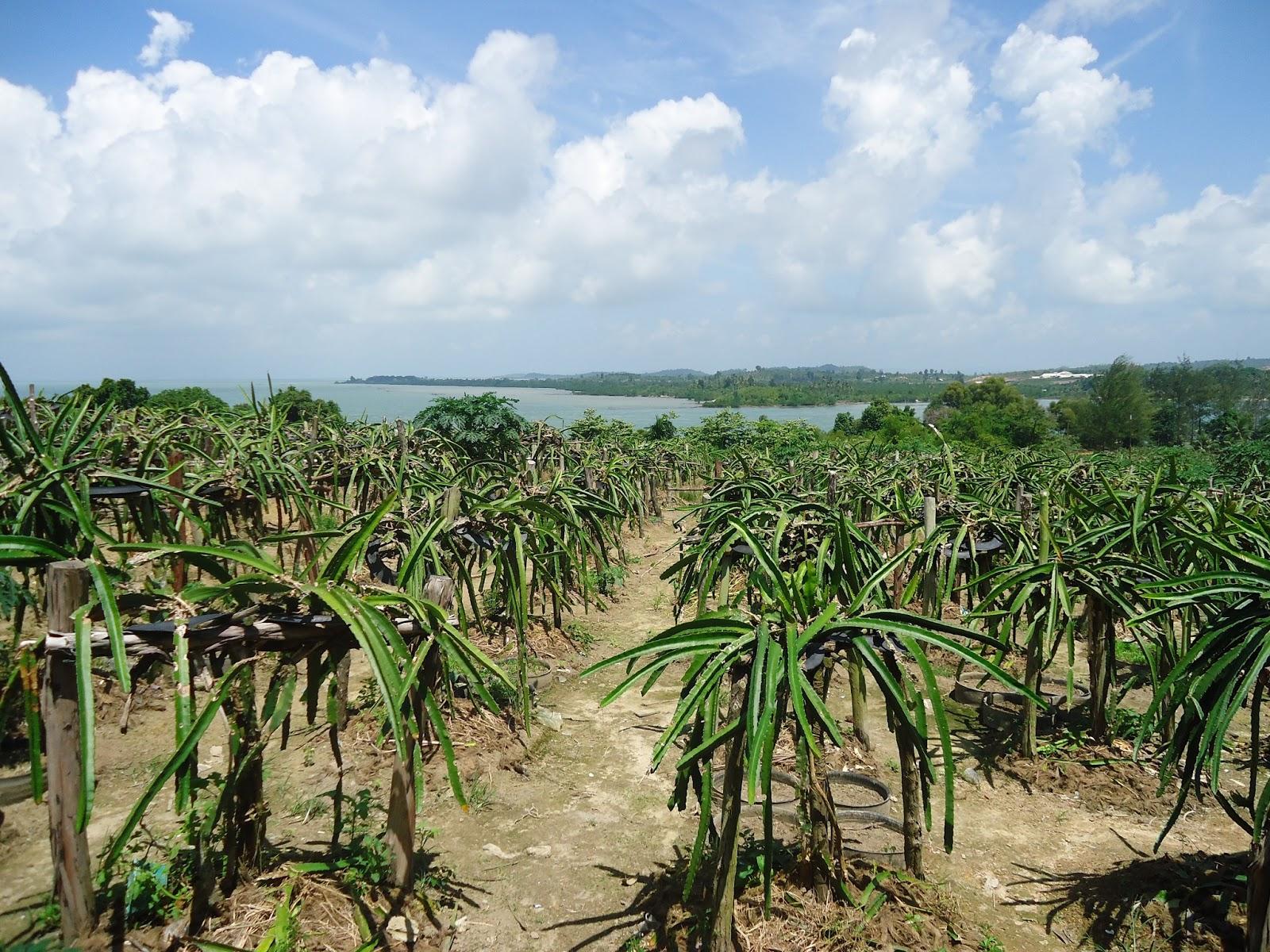 Agrowisata Pulau Naga