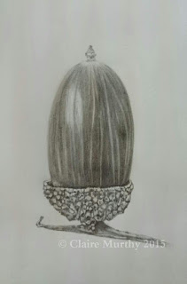 acorn sketch in detail