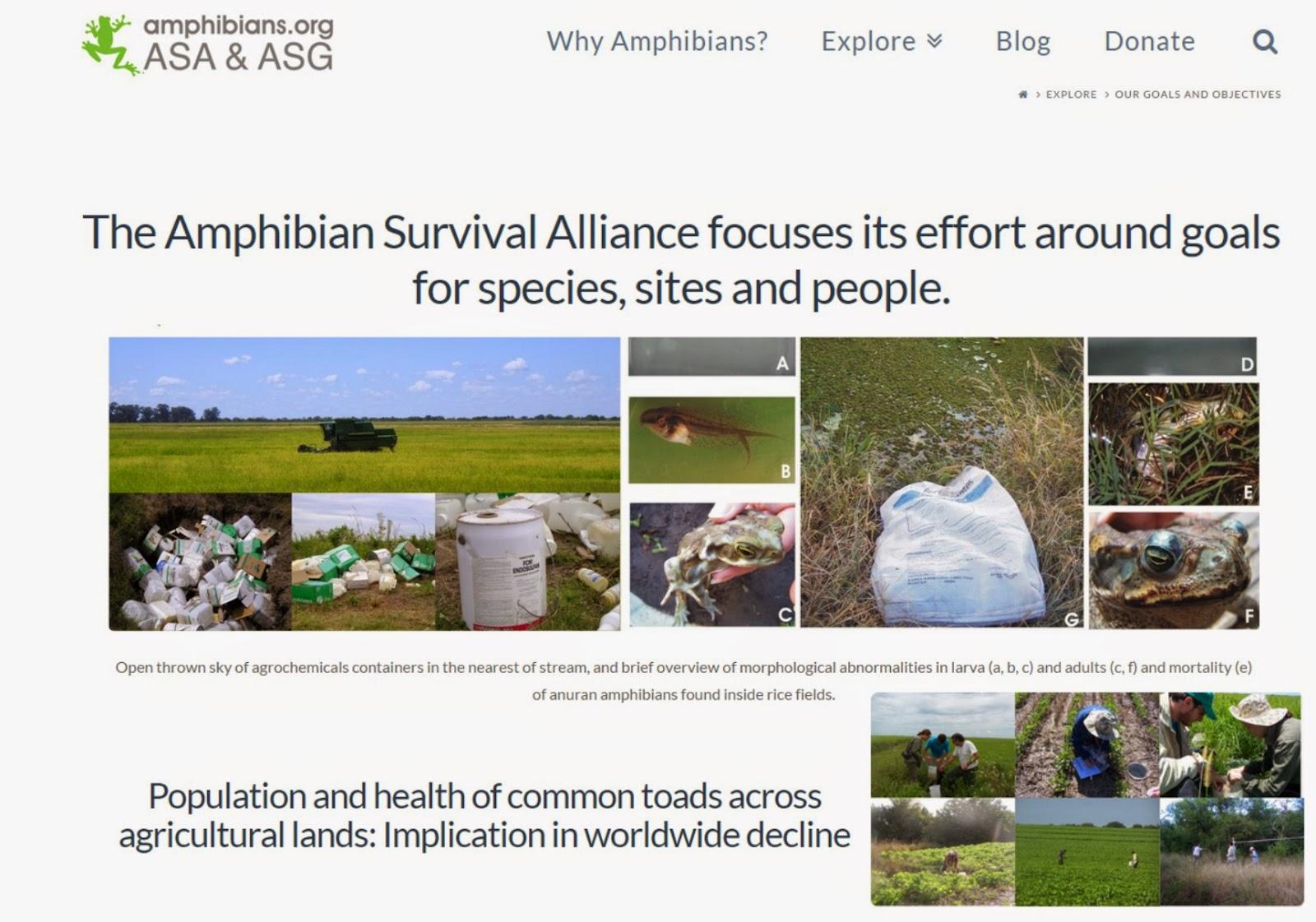 http://www.amphibians.org/seedgrants/2005peltzer/