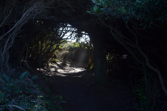 tunnel of trees and brush