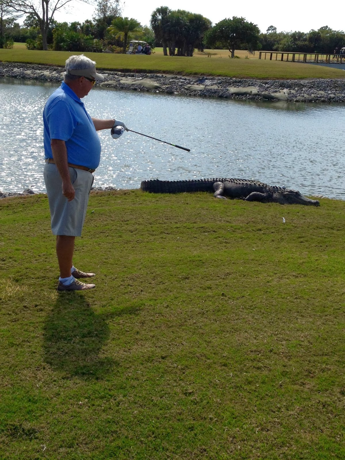 A Golf Ball Lands on Top of a Alligator's Head in Florida