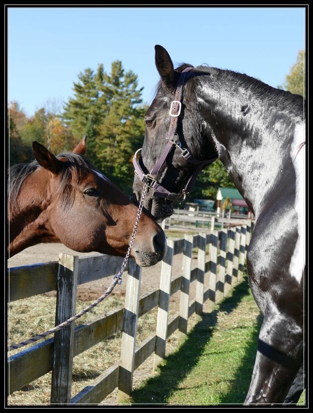 Jax & Sakima at Dakota Ridge Farm