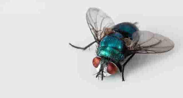 Cara Mengusir Lalat di Rumah Secara Alami, Cukup Ikuti Langkah Sederhana Ini!
