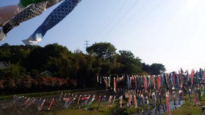 鶴見川参道橋 鯉のぼり