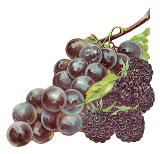 fruit grapes blackberry image botanical artwork digital clipart