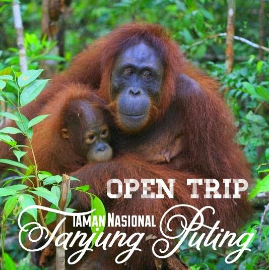 Tour Murah Tanjung Puting