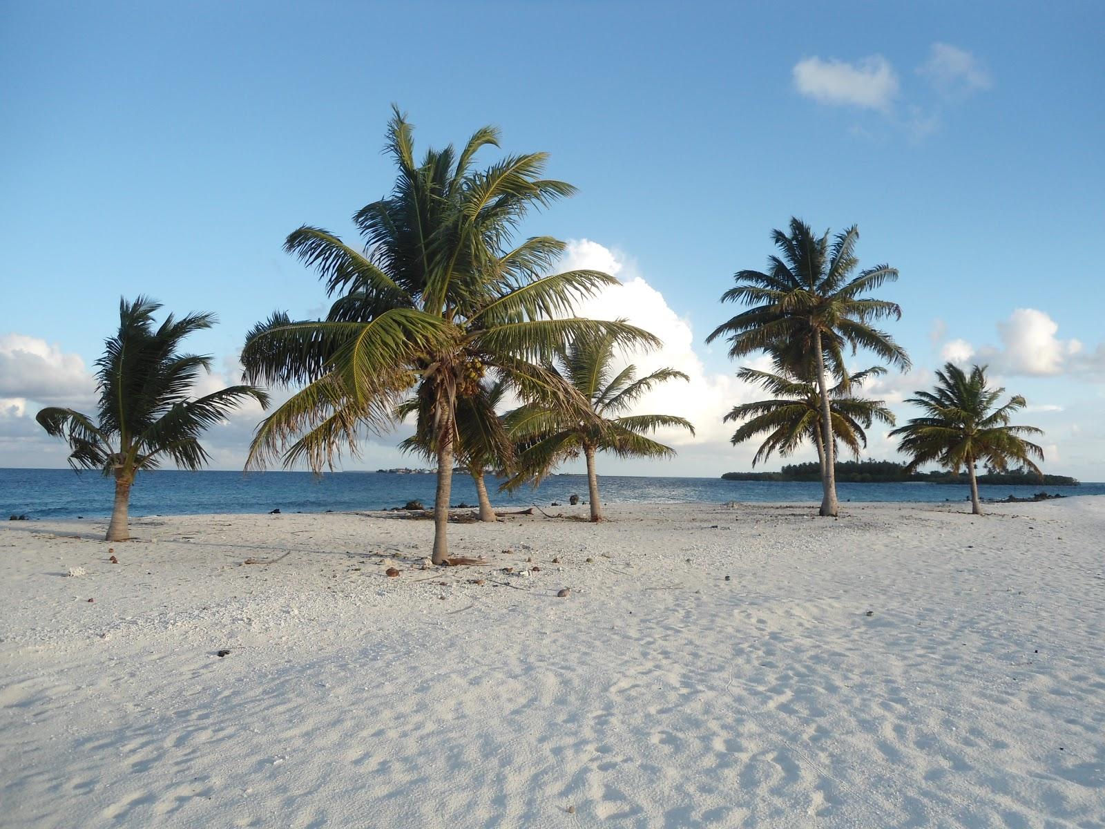 7 palm tree island. Black Bedroom Furniture Sets. Home Design Ideas
