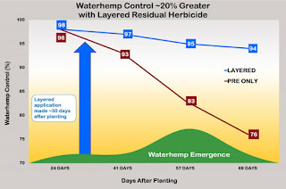 waterhemp-control