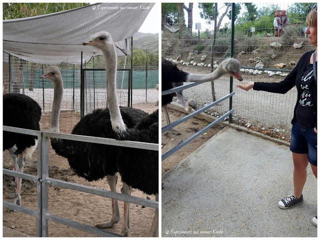 Rhodos im Herbst | Urlaub | Familienurlaub | Griechenland | Urlaub mit Kind | Unterwegs auf Rhodos | Farma of Rhodos