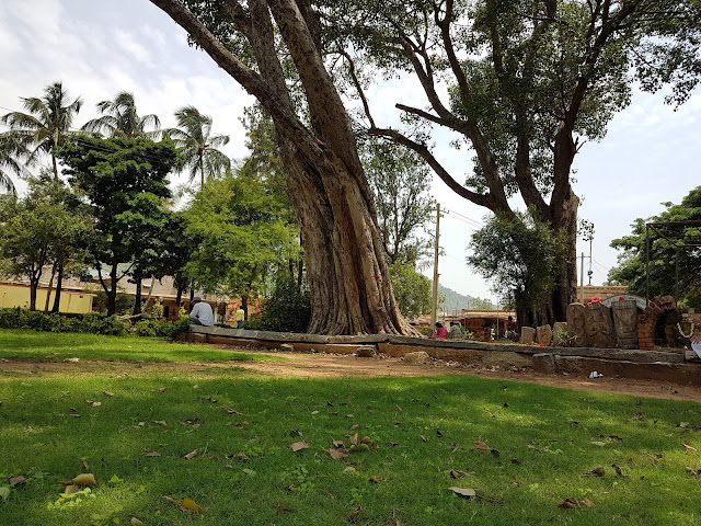Pipal tree at Bhoga Nandeeshwara Temple