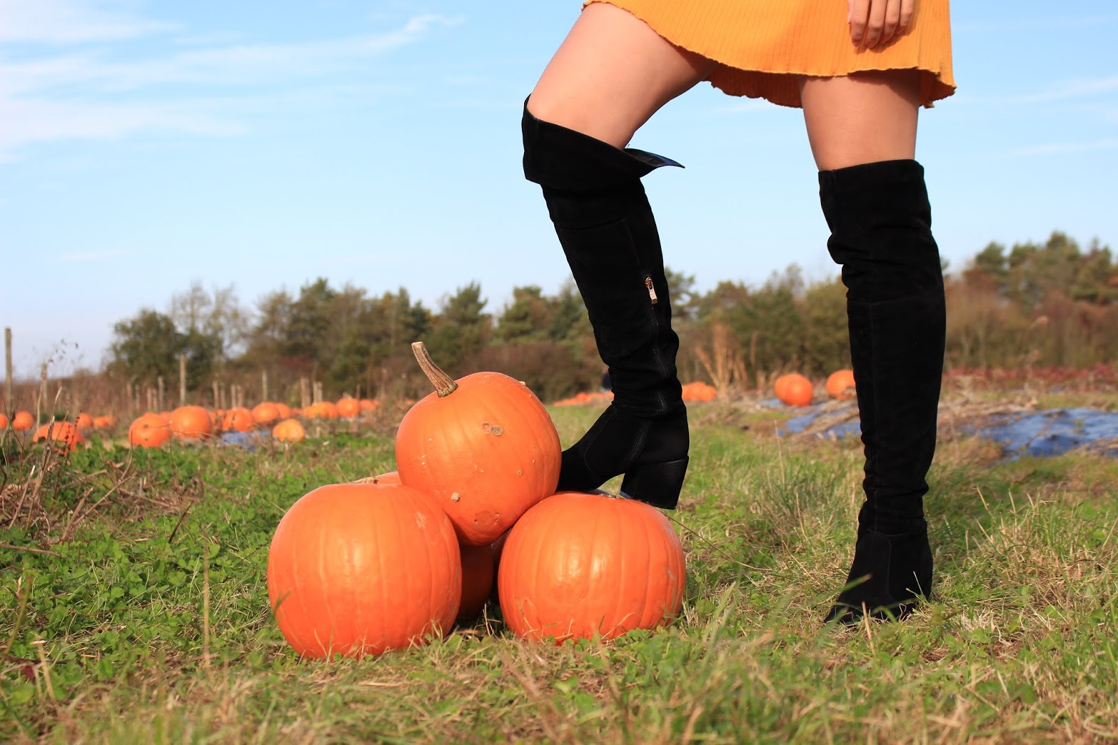 Abbey's foot, clad in black knee high boots, rests on a stack of pumpkins