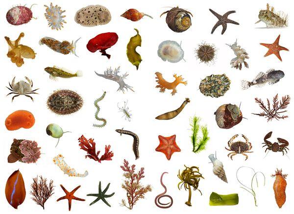 Terrestrial Mammals Share 110