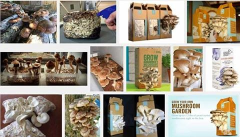Click Here. Growing Organic Mushrooms.