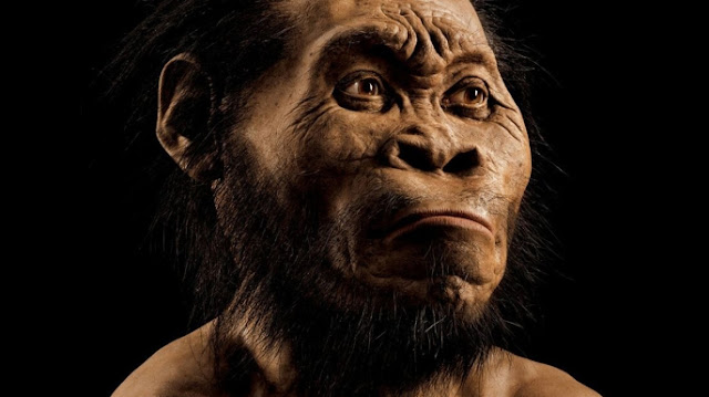 New Human-Like Species Found in South Africa