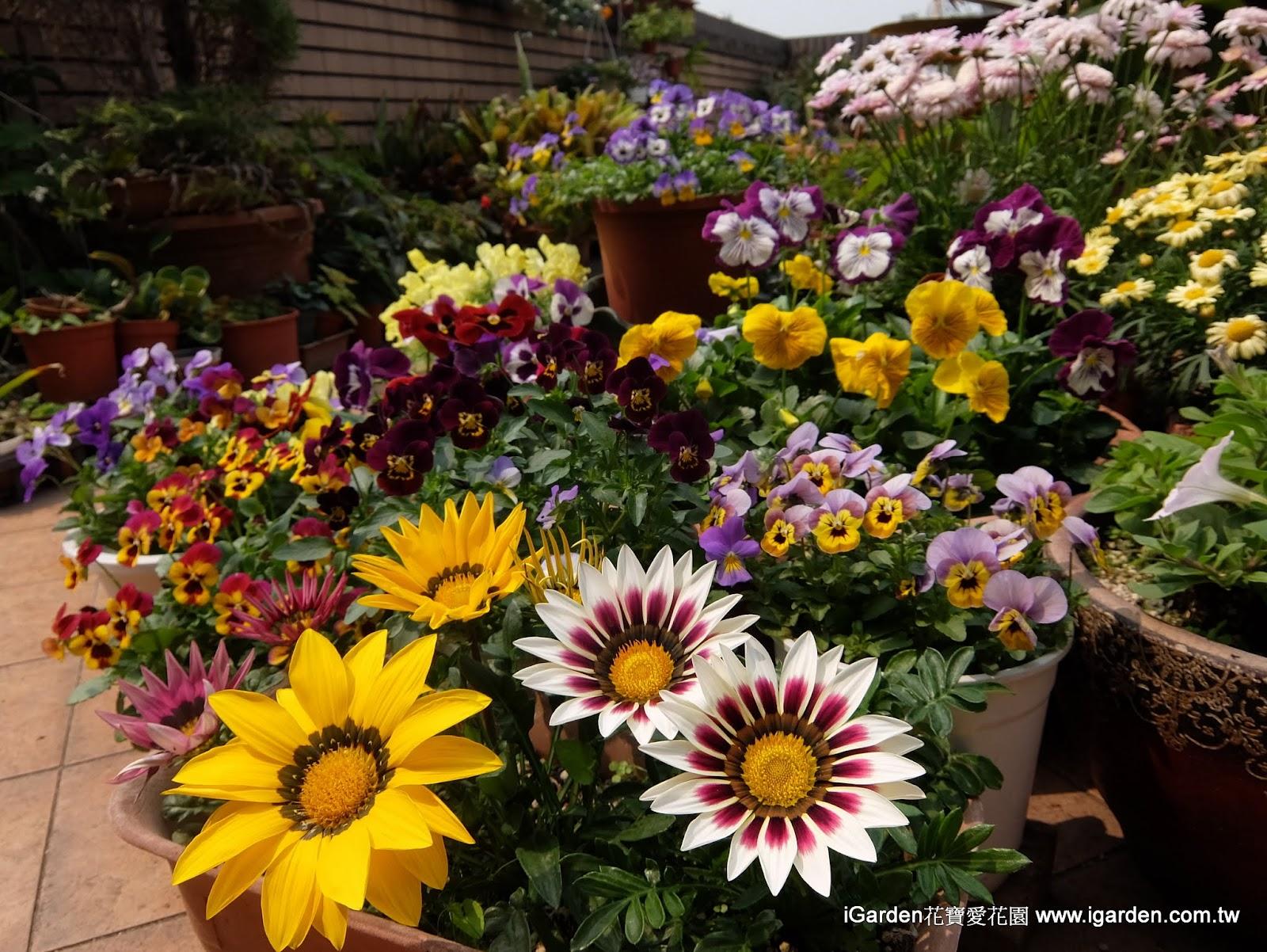 三月開什麼花:2015年3月頂樓花園實錄 - 園藝部落格:iGarden 花寶愛花園園藝文摘Plus