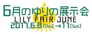 Lily Fair June