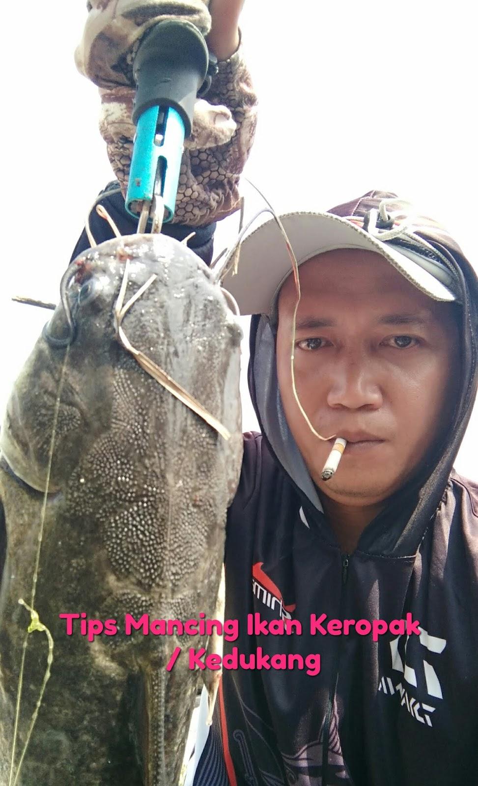 Tips Cara Mancing Ikan Keropak Atau Kedukang ~ Aliems' Journey