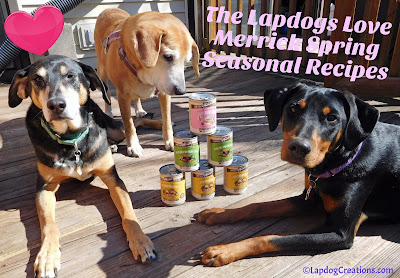The Lapdogs Love #Merrick Spring Seasonal Recipes #dogfood #BestDogEver #dobermanpuppy #seniordog #rescueddogs #adoptdontshop #LapdogCreations ©LapdogCreations