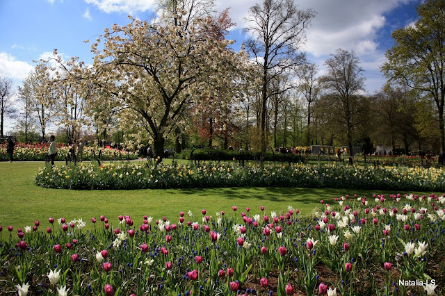 Голландия, как посетить, парк, Кекенхоф, тюльпаны, Нидерланды, луковичные, цветы