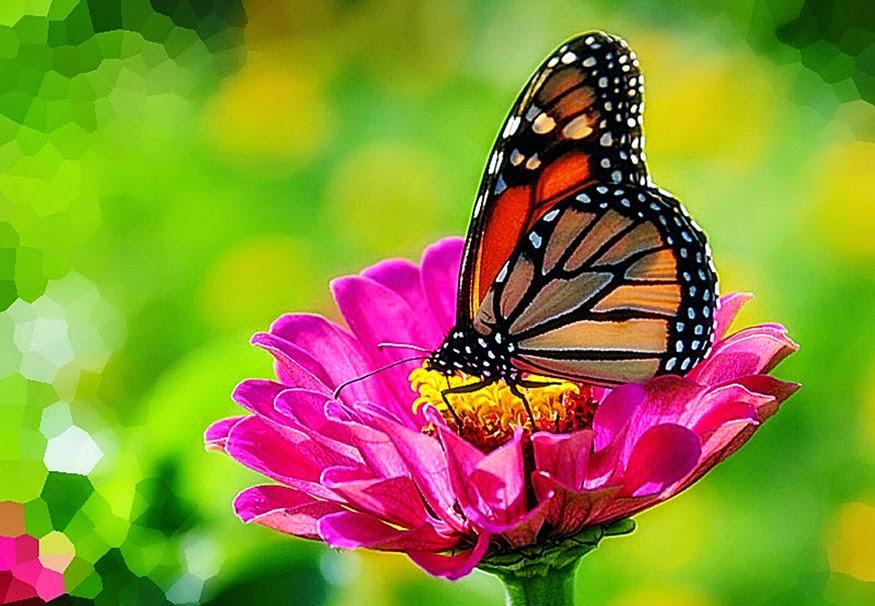 Bonitas Mariposas