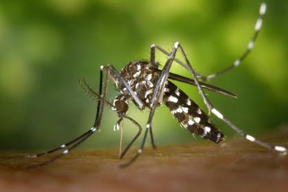 Benarkah Belum Mandi Menarik Nyamuk Menggigit?