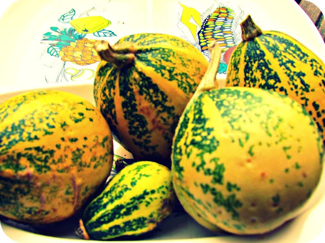 Allotment grown gourds