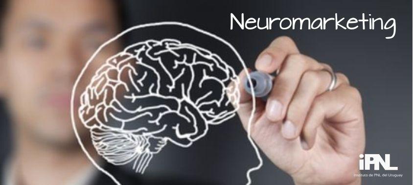 Dibujando el cerebro